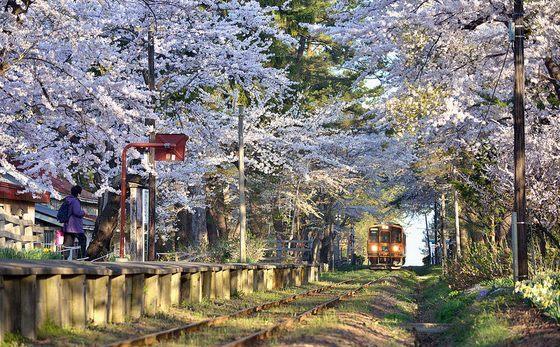 صور للربيع الساحر في لمدينة أوموري بدولة اليابان