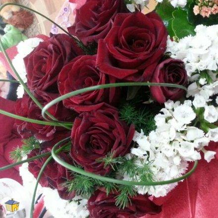 orchid-flowers-amman-1550547014..
