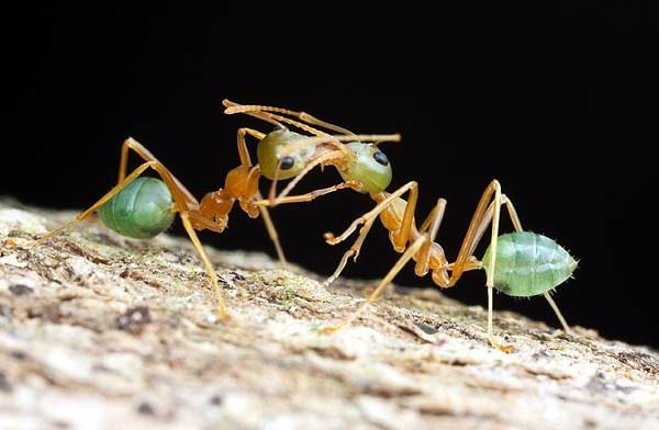 الحسد عند النمل منتديات تغاريد