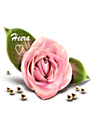وردة هيرا أصغر وأوضح.png
