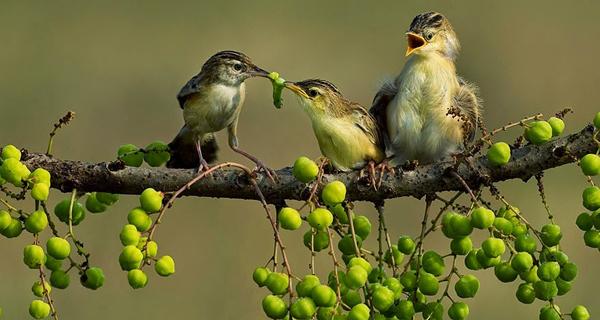 ajanoubia.com_wp_content_uploads_2016_12_bird_National_Geographic.