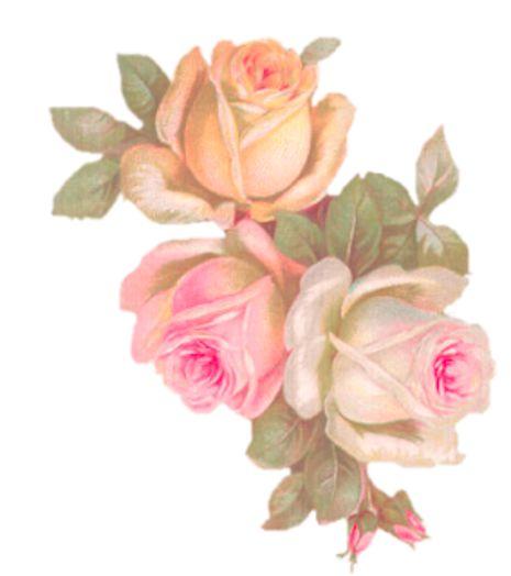 ai.pinimg.com_736x_05_99_d5_0599d5ae7ec07ecf35ffe47b9997d1af__rose_pictures_rose_decor.
