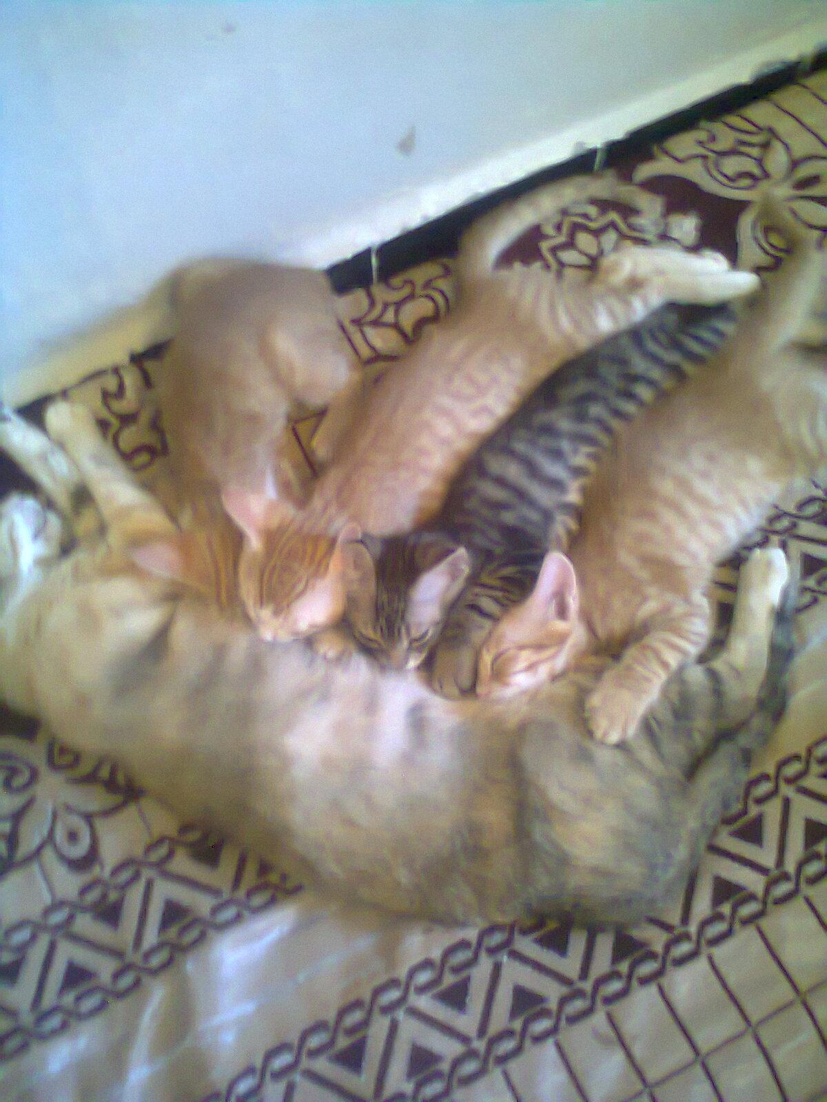 aimg.tgareed.com_imgcache_1078678.