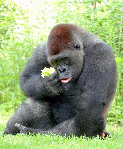 aforums.graaam.com_images_images_thumbs_b49e574c6cf941b37c7afd4f402ba2bb.jpg
