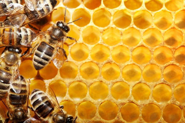 حقائق علميه العسل